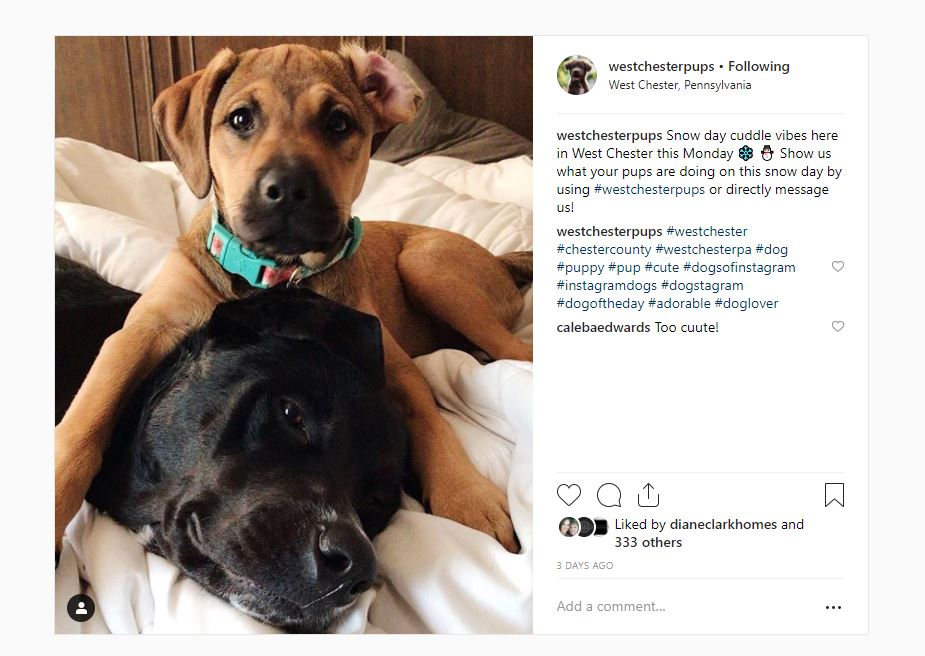 5 Local Instagrams You're Going toLove