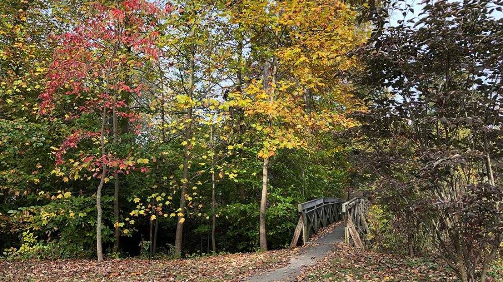 everhart park_fall