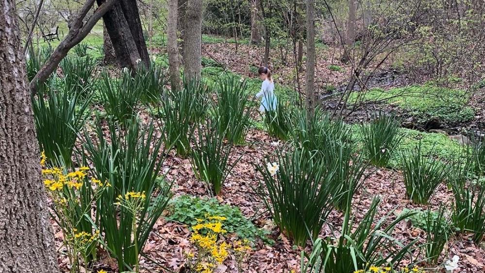 everhart park spring_piper