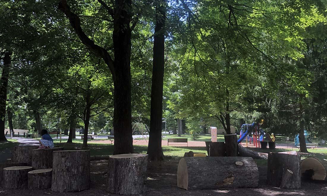 everhart park tree